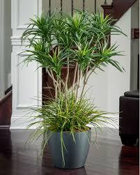 Indoor Plant Arrangements Best 25 Silk Plants Ideas On Pinterest Artificial Plants Boho