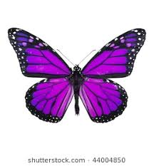 purple butterfly stock images royalty free images vectors