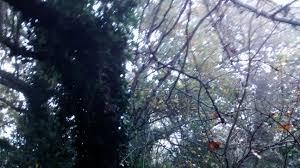 forest glade forest glade mystique 5