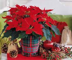 Plant Used As A Christmas Decoration Christmas Table Decorations 17 Ideas For Holiday Table Decorating