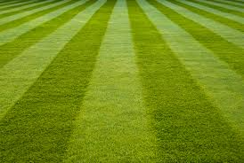 ornamental garden turf buy turf essex and turf suffolk delivered