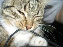 pets3000 com meow mix cat food
