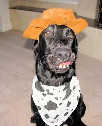 dr debbie pet halloween costumes spook tastic or just crazy