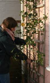 Support For Climbing Plants - how to plant and grow roses