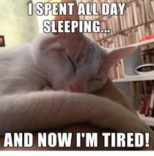 Sleepy Cat Meme - i spent al day sleeping and now i m tired grumpy cat meme on sizzle