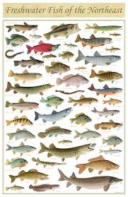 best 25 freshwater fish ideas on freshwater fish tank
