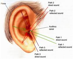 The Human Ear Anatomy How The Human Ear Hears Conversation Understanding Noises