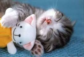 game cuter animal pic poster 26