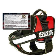 does a service dog have to wear a service dog vest the dog effect
