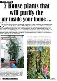 Plants That Don T Need Light Decorating Bedroom With Plants Air Purifying Indoor Names That