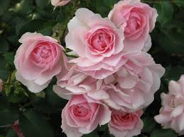 top 10 plants for small gardens the english garden
