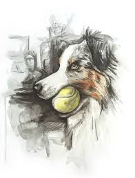 australian shepherd illustration art elastic