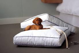 Comfort Pet Certification The Rise Of Pet Certified Hotels Bcbusiness