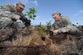 native hawaiian plants gimlets u0027 continue support of big island veterans cemetery hawaii