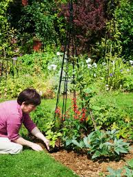 how to plant a garden obelisk supporting climbing plants how