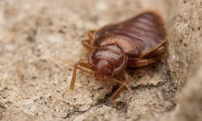 Treatment For Bed Bugs Smarter Bed Bug Treatment Gregory Pest Solutions