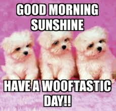Cute Memes - funny cute silly good morning memes
