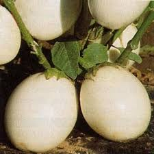 ornamental eggplant seeds solanum melongena golden eggs flower seed