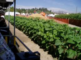 la farm forneris farms harvest festival starts this weekend
