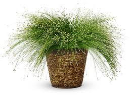 fiber optic grass green meadow growers