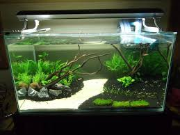 Live Plants In Community Aquariums by Best 25 Aquarium Ideas Ideas On Pinterest Aquarium Plant Fish