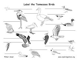 Tennessee birds images Tennessee habitats mammals birds amphibians reptiles jpg
