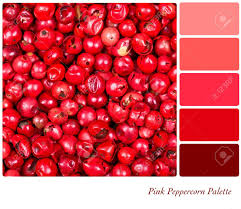 a background of pink peppercorns in a colour palette with