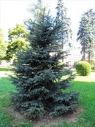 gc6xj4y blue spruce traditional cache in new york united states