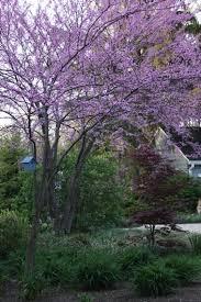 garden trees garden design