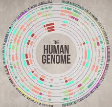 Dna Mapping Human Genome Project By Mackenzie Rooks Infographic