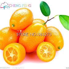 ediable fruit cheap seeds 10pcs edible oranges fruit mandarin bonsai tree seeds