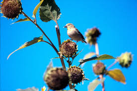how gardeners can help keep birds healthy through winter