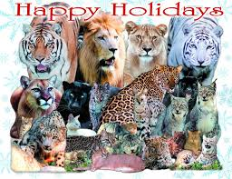 today at big cat rescue dec 25 merry christmas