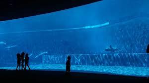 vasche acquario acquario di genova vasca dei delfini picture of acquario di