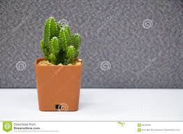 cactus plant on table in office stock photo image 84263876