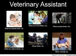 Vet Tech Memes - veterinary assistant what i actually do seems like a more