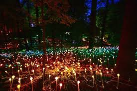 atlanta botanical garden lights atlanta botanical garden s light display is rather dazzling curbed