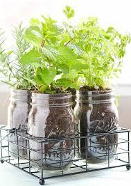 herbs indoors how to start growing herbs indoors on a windowsill gardenoholic
