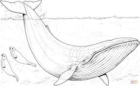 black and white shark coloring page redcabworcester