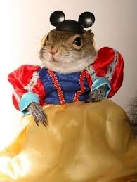 Hamster Halloween Costume 32 Purr Fectly Cute Halloween Costumes Pets Spooky