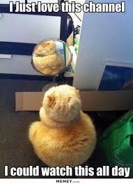 Mirror Meme - mirror memes funny mirror pictures memey com