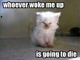 Grumpy Cat Friday Meme - jimmyfungus com the best of grumpy cat the best grumpy cat memes