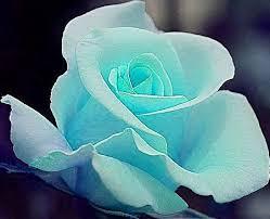 Teal Roses Tiffany Blue Rose June On Off Flickr