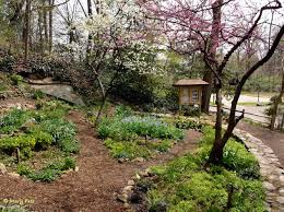 native plants of virginia quarry shade garden at bon air park master gardeners of northern