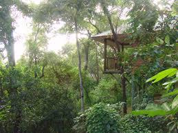 thala beach lodge eucalypt bungalow canopy image 235672 polka