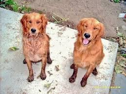 Soggy Doggy Doormat For These Two Pups A Soggy Doggy Doormat Is A Must Have