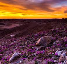 why california deserts are experiencing a u0027super bloom u0027