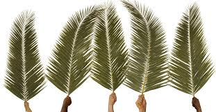 palms for palm sunday what is palm sunday 5 historical truths