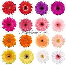 gerbera daisies wedding flowers gerbera wholesale gerbera daisies