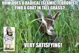 Grass Memes - goat in tall grass memes imgflip